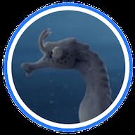 The-Lost-Seahorse-Film-Raja-Ampat